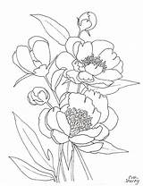Peony Coloring Line Peonies Pages Flower Template Printable Flowers Pink Templates sketch template