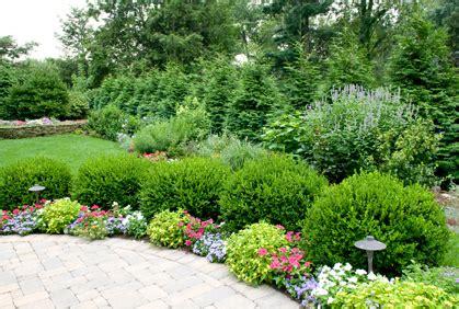 bush ideas pictures of shrubs for landscaping 2016 design plans