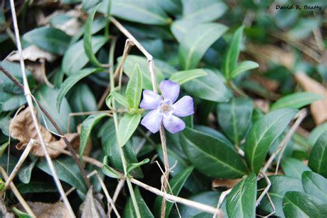 herbal remedies  home magical properties  plants