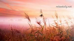Background Music Instrumentals - relaxdaily - B-Sides N°1 ...
