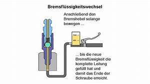 Roller Bremse Entlüften : bremse entl ften bremsfl ssigkeit wechseln mit dem ~ Kayakingforconservation.com Haus und Dekorationen