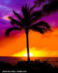 Beautiful Hawaii Sunset Palm Trees