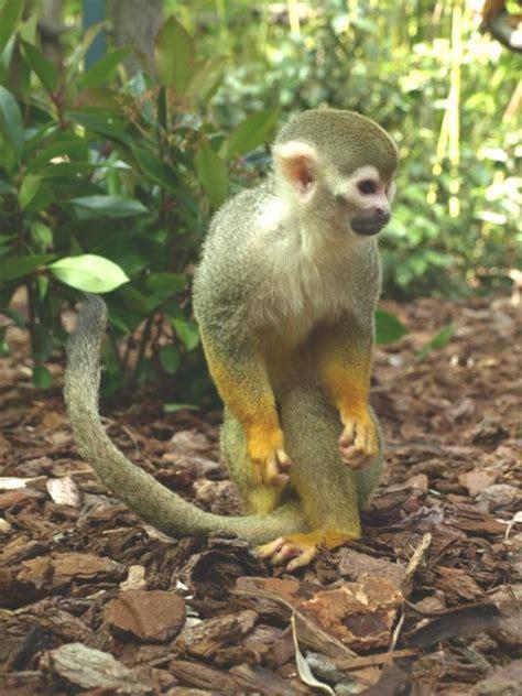 jardin zoologique tropical 224 la londe les maures 83250
