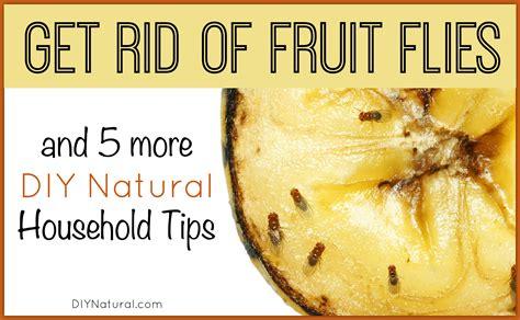 rid  fruit flies    diy natural home solutions