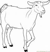Goat Coloring Printable Walking Farm Chin Animal Goats Animals Pdf Coloringpages101 Sheet Ages Adult Doghousemusic sketch template