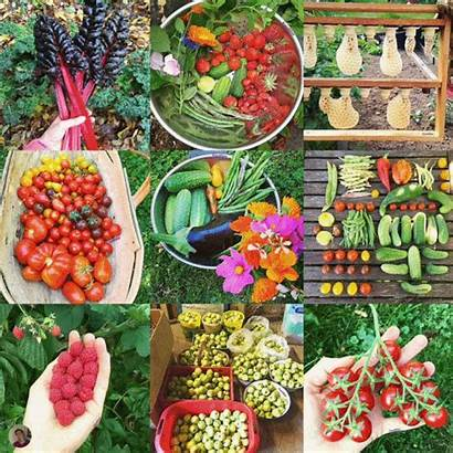 Organic Grow Round Happy Deadline 59pm Shipment