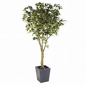 Ficus Benjamini Vermehren : red hot plants heysham lancashire la3 2fl ~ Lizthompson.info Haus und Dekorationen