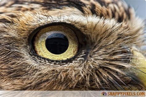 amazing closeup pictures  animals eyes snappy pixels