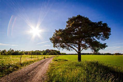 road, Field, Tree, Landscape Wallpapers HD / Desktop and ...