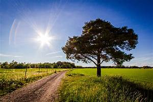 Road, Field, Tree, Landscape, Wallpapers, Hd, Desktop, And, Mobile, Backgrounds
