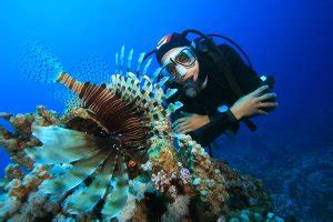 How to Become a Marine Biologist