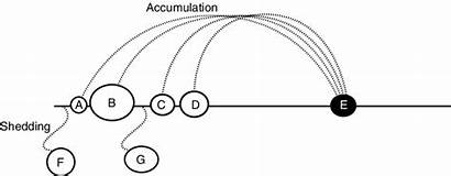 Accumulation Meaning Representing Unfolds Shedding