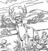 Coloring Deer Pages Tailed Animals Popular sketch template