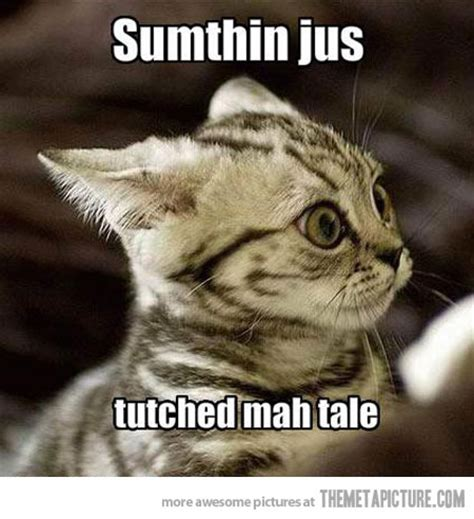 Scared Cat Meme - friday 11 05 2018 prepare to enter the twilight zone the daily kitten