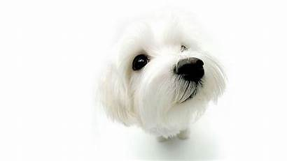 Dog Dogs Background Wallpapers Animal Wall