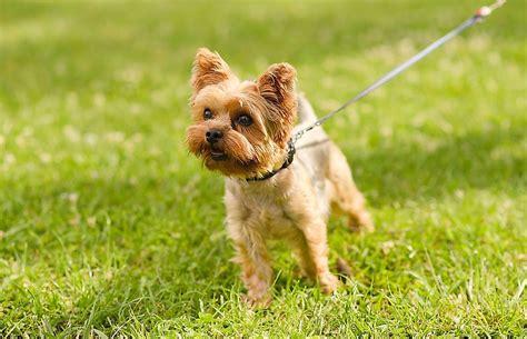 10 Dog Breeds Who Live the Longest - WorldAtlas