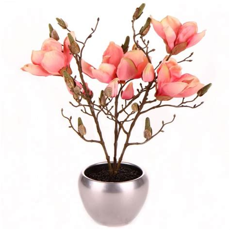 palms24 potted plants flowers in a pot magnolias in silver pot green brown pink