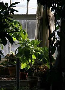 Five, Easy, To, Grow, Low, Light, Houseplants