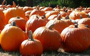 Fall Pumpkin Wallpaper Hd wallpaper - 1231907