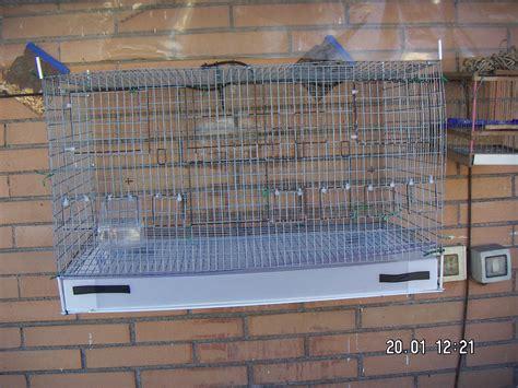 Riproduzione Canarini In Gabbia - aiutatemi pls piccoli uccelli da gabbia e da voliera 3