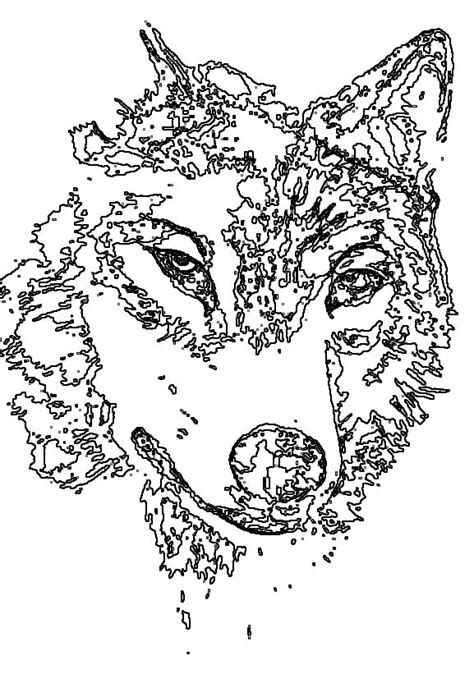 147365-detailed-animal-coloring-pages-for-adults.gif (577