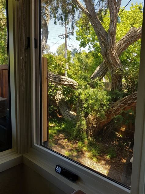 window flyscreens  timber windows full guide
