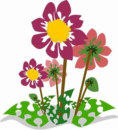 Clipart Nature Flower Plant Natur Cliparts Flora