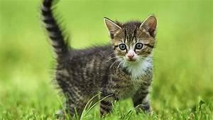 Katzen Fernhalten Von Möbeln : pur katzen zdfmediathek ~ Michelbontemps.com Haus und Dekorationen