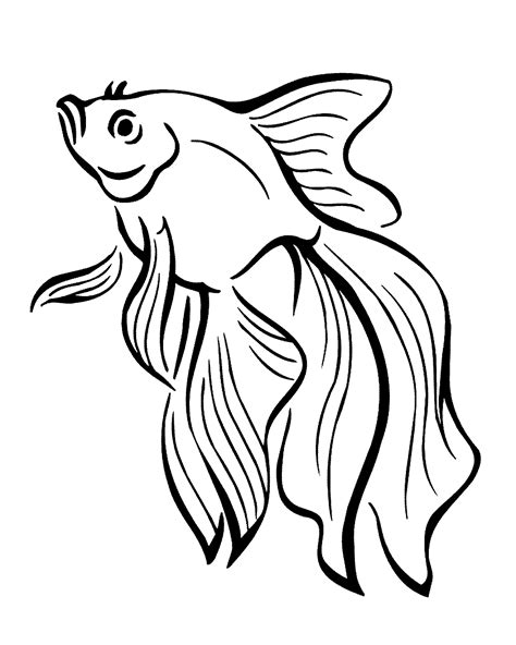 gambar ikan hias kartun berwarna ala model