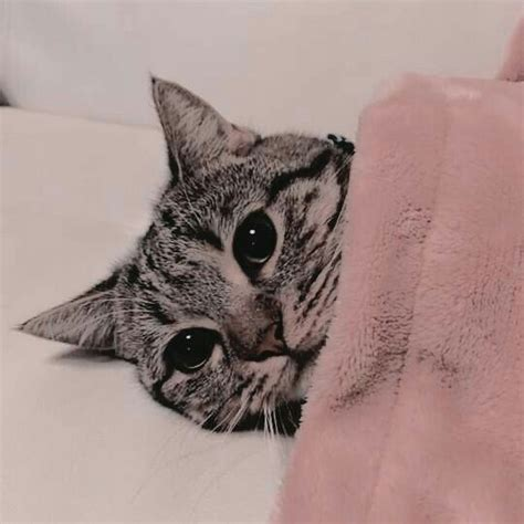 aesthetic cat pink cat aesthetic cat icon cat