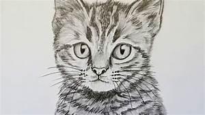 Bilder Zeichnen Für Anfänger : katze zeichnen lernen f r anf nger tiere zeichnen youtube ~ Frokenaadalensverden.com Haus und Dekorationen