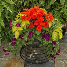 bright fall  winter flower pot backyard makeover