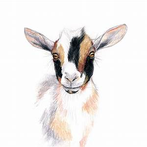 drawn goat | Search Results | Dunia Pictures