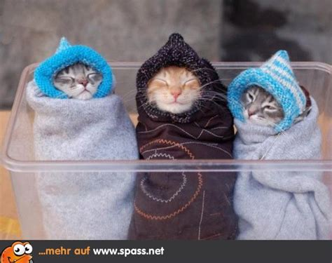 wt lustige katzenbilder woche spassige litle pups