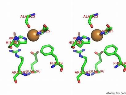 Copper Tectaria Pdb Stereo Polysaccharide Monooxygenase Aa10