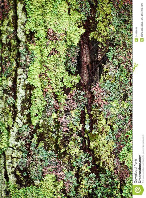lichen sur le tronc d arbre image stock image 34236641