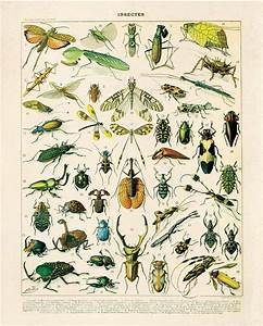 Insects Diagram Vintage Reproduction Print  Variety Of Insects