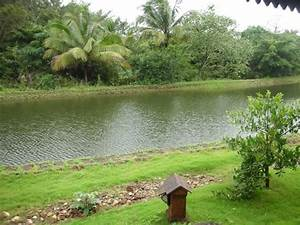 Rain water harvesting pond next to the cottages - Picture ...