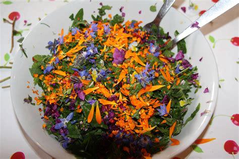 cuisine des plantes sauvages je cuisine les plantes sauvages recent advances in