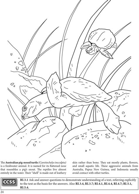 BOOST The World of Turtles Coloring Book Dover Publications | Stained glass patterns free