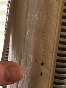 to hotels with bed bugs seattle pest control rescues With bed bugs seattle