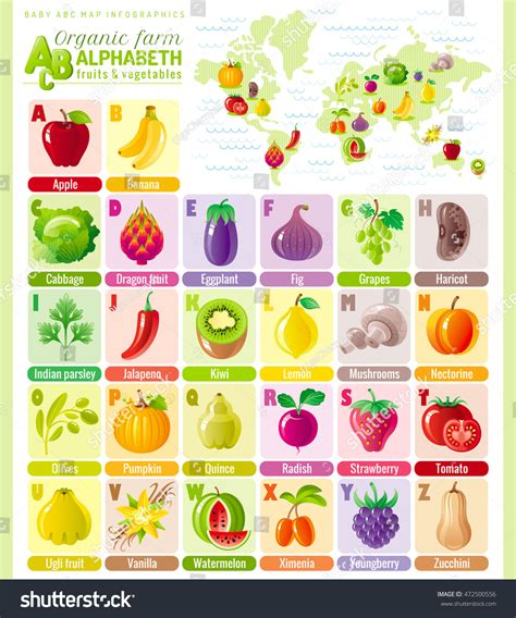 abc cuisines alphabet food infographics fruit vegetable berry stock