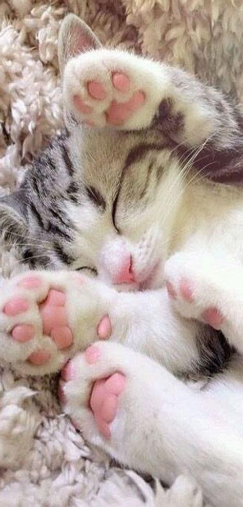 Die Besten 25+ Katzenbabys Ideen Auf Pinterest Niedliche