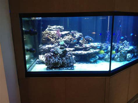 installation aquarium eau de mer installation d un aquarium d eau de mer
