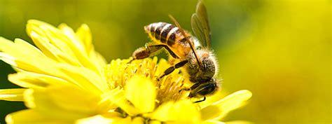 Botanischer Garten München Bienen forschungsprojekt im botanischen garten zum flugverhalten