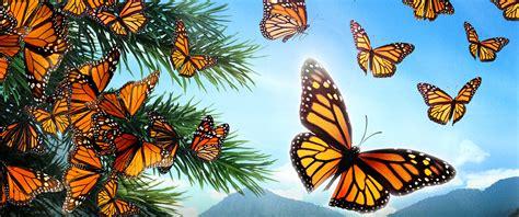 flight   butterflies  canadian museum  history