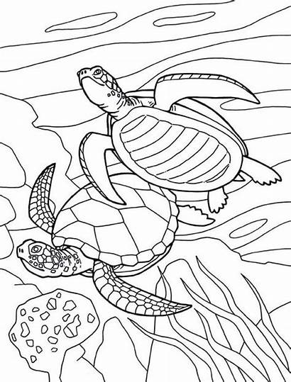 Turtle Coloring Sea Pages Drawing Pond Fish
