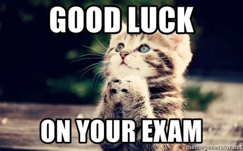 Good Luck Cat Meme - pics for gt good luck exam meme