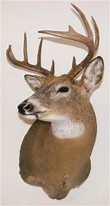 Whitetail deer forms