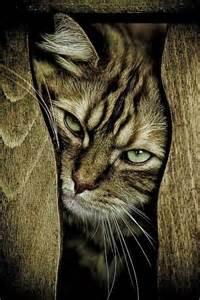 Grumpy Cat I'm Not Happy